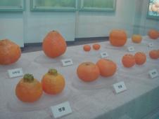 柑橘博物館