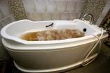 チョコレート風呂