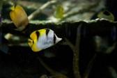 色合いが綺麗な熱帯魚