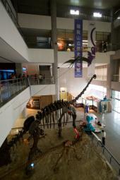 博物館にいる大きな恐竜