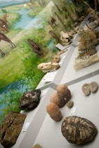 様々な昔の生物の化石