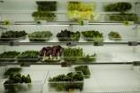 野菜冷蔵庫2
