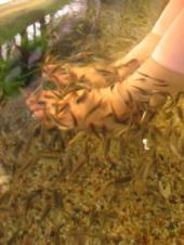 Kenko Reflexology&Fish Spa