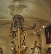 地質・古生物博物館