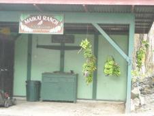 ホルアロア・コーヒー農園
