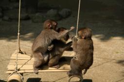 高崎山自然動物公園