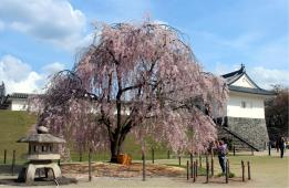 霞城公園(山形城跡)